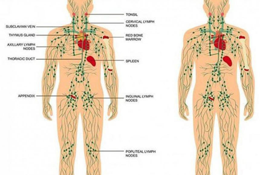 Lymphatic Drainage Brooklyn